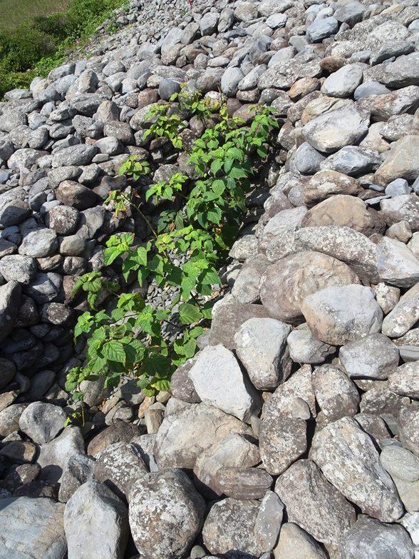 相島大塚の竪穴式石室