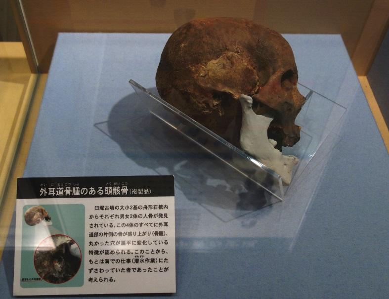 臼塚古墳石棺の頭蓋骨レプリカ(海部古墳資料館)