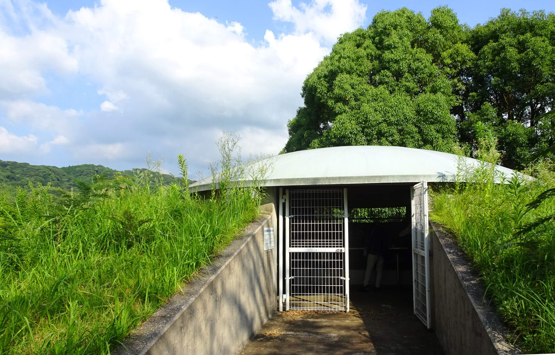 健徳寺2号墳の石室入口と雑草