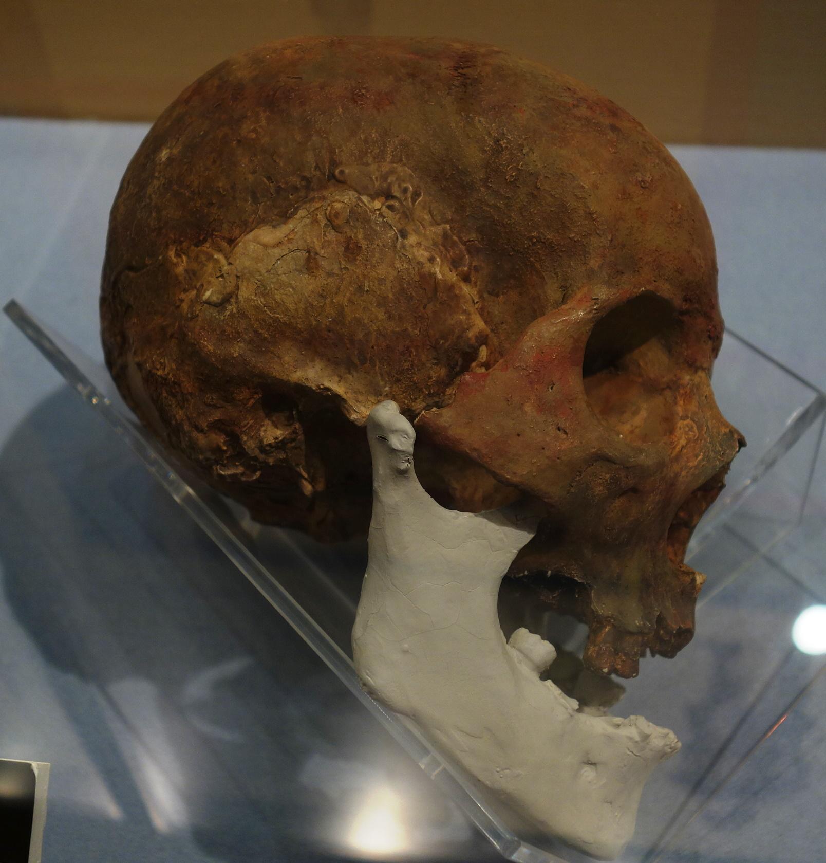 臼塚古墳の頭蓋骨